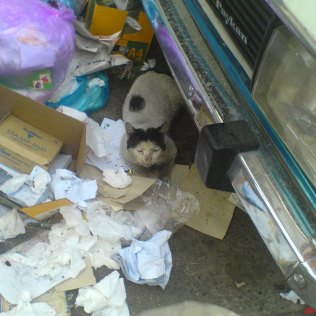 در استفاده از آشغالها گربه و سگ تفاهم داشتند.